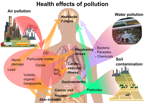 map of the body with Health effects of pollution